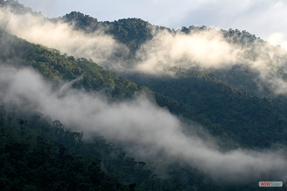 Ecuadorian Cloud Forest
